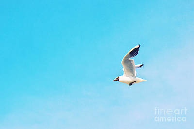 The Black Headed Gull Art Print by Angela Doelling AD DESIGN Photo and PhotoArt