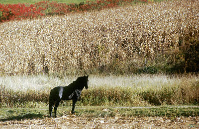 Photograph - The Black Horse by Jon Lord