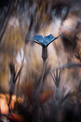 Macro Flower Photograph - The Blue Crown by Fabien Bravin