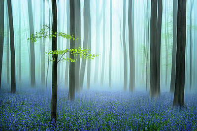 Photograph - The Blue Forest ........ by Piet Haaksma