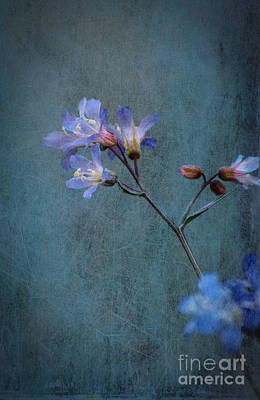 Photograph - The Blues by Bianca Nadeau