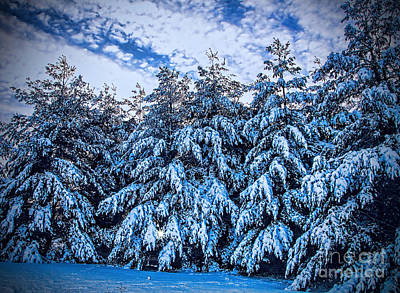 Photograph - The Blues Of Winter by Elizabeth Winter