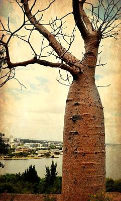 The Boab Tree Art Print