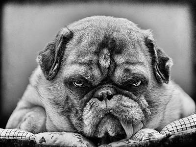 Angry Photograph - The Boss by Angelika Martha Himburg