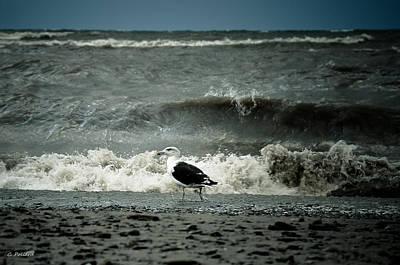 Beachglass Photograph - The Boss by Christy Pollard