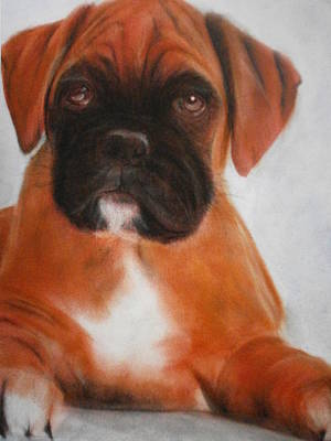 The Boxer Art Print by Alan Brunt