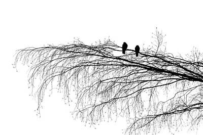 The Branch Of Reconciliation Art Print by Alexander Senin