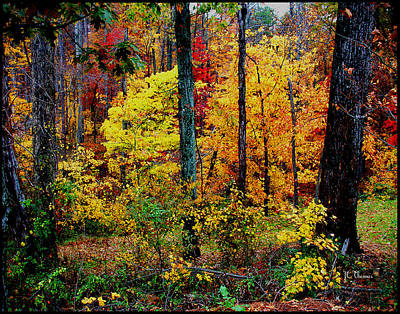 Photograph - The Bright Colors Of Fall by James C Thomas