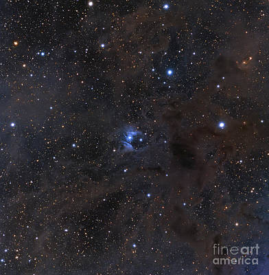 Photograph - The Bright Star Vdb 16, Dust by Michael Miller