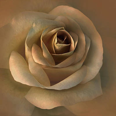 Roses Royalty-Free and Rights-Managed Images - The Bronze Rose Flower by Jennie Marie Schell