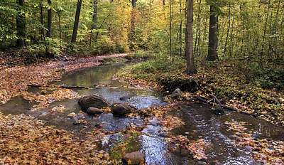 Photograph - The Brook In The Woods II by Robin Webster