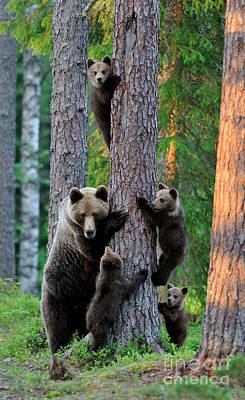 A Summer Evening Photograph - The Brown Bear Family by Erik Mandre