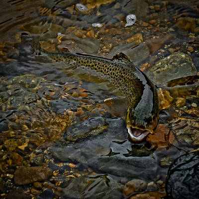 The Brown Trout Art Print by Ernie Echols