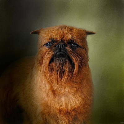 Griffon Photograph - The Brussels Griffon by Jai Johnson