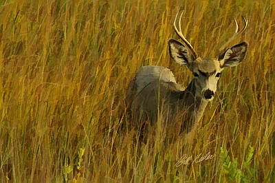Photograph - The Buck Poses Here by Bill Kesler