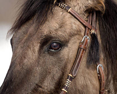 Photograph - The Buckskin by Jack Bell