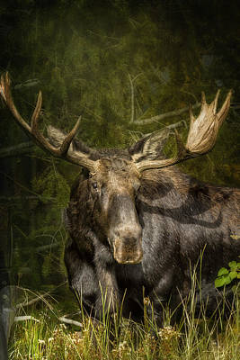 Photograph - The Bull Moose by Belinda Greb