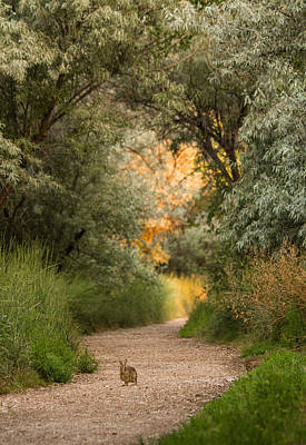 Photograph - The Bunny Trail by Heidi Hermes