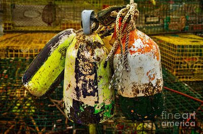 Photograph - The Buoys And The Lobster Traps by Barbara Youngleson