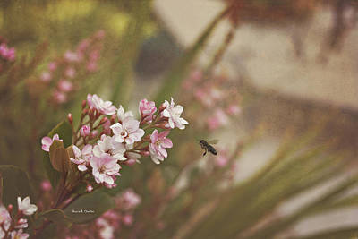 The Busy Bee Art Print by Angela A Stanton