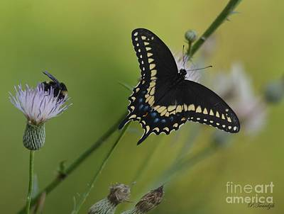 Photograph - The Butterfly And The Bee by Patricia Twardzik