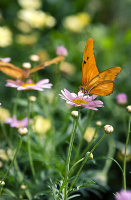Photograph - The Butterfly And The Flower  by Saija  Lehtonen