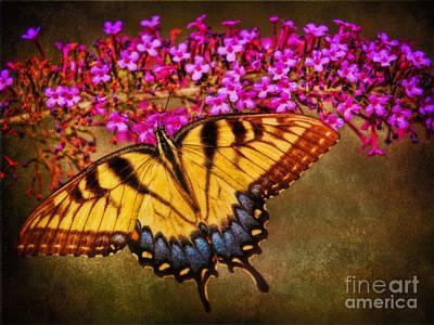 The Butterfly Effect Art Print by Elizabeth Winter