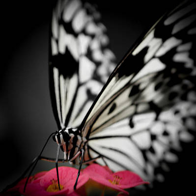 Photograph - The Butterfly Emerges by Jen Baptist