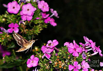Photograph - The Butterfly Garden At Night by Elizabeth Winter