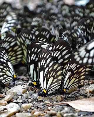 Photograph - The Butterfly Gathering 2 by Kim Bemis