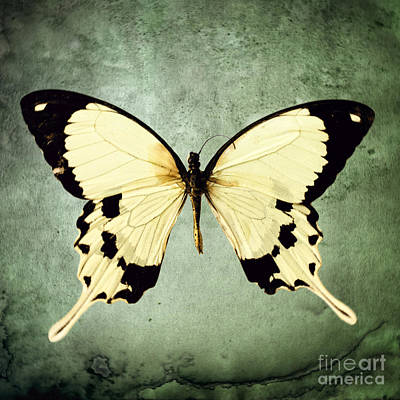 The Butterfly Project 1 Art Print by Diane Miller