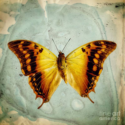 The Butterfly Project 6 Art Print by Diane Miller