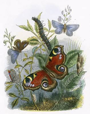 The Butterfly Vivarium Art Print