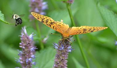 Photograph - The Butterfly Wins by Amy Porter