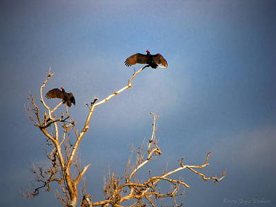 Numbers Plus Photograph - The Buzzard Roost by Joyce Dickens