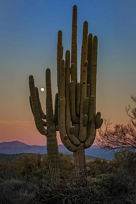 Photograph - Moonrise Over Tonto by Rick Berk