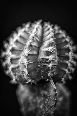 Photograph - The Cactus Cacti In Grand Black And White by David Haskett