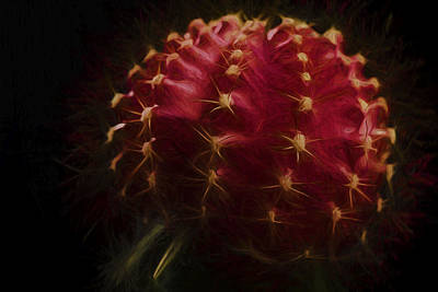 Photograph - The Cactus Painted Macro by David Haskett II