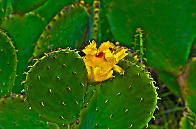 Photograph - The Cactus by Richard J Cassato