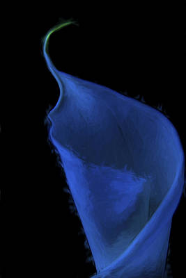 The Calla Lily Flower Painted Digitally In Blue Green Print by David Haskett