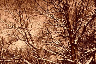 Winter Sepia Scene Digital Art - The Calm After The Storm - Sepia by Aurelio Zucco