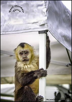 Monkey Photograph - The Capuchin Tent Monkey by LeeAnn McLaneGoetz McLaneGoetzStudioLLCcom