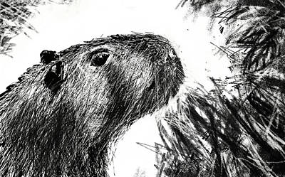 The Capybara  Original by Paul Sutcliffe