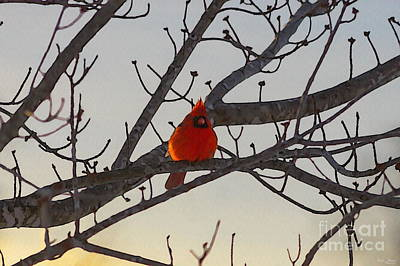 Photograph - The Cardinal In The Morning by Jennifer White