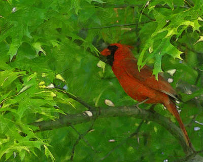 Cardinal Digital Art - The Cardinal Painterly by Ernie Echols
