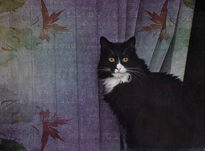 Tuxedo Cat Digital Art - The Cat In The Window by Barbara Manis