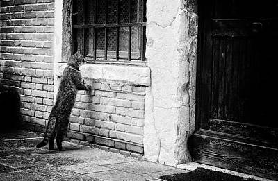 Old Door Wall Art - Photograph - The Cat by Izabella V?gh