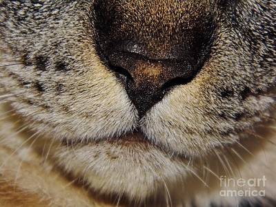 Photograph - The - Cat - Nose by D Hackett