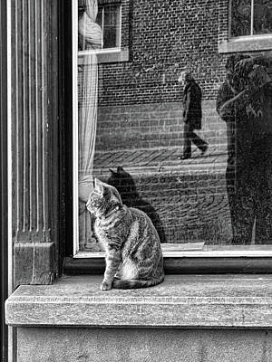 Bruges Photograph - The Cat, The Lady And ... by Artistname