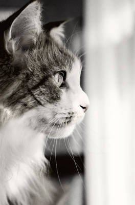 Cat Photograph - The Cat's Meow by Donna Doherty